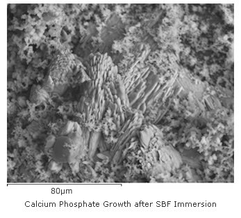 Calcium Phosphate Growth after SBF Immersion